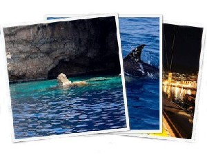 Sailing Greek islands - Greece charter sailing holidays - Argosaronikos Gulf, Agistri, Poros, Idra, Dolphins