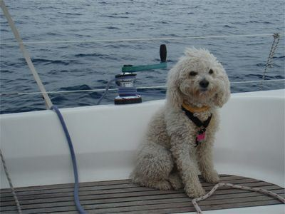 Sailing Greek islands - Greece charter sailing holidays - Animaux Bienvenus - Dog sailing near winch