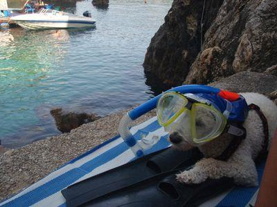 Sailing Greek islands - Greece charter sailing holidays - Pet Friendly - Dog with Snorkeling Equipment