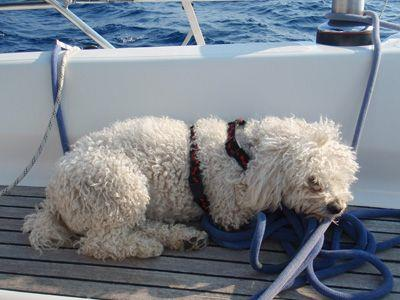 Sailing Greek islands - Greece charter sailing holidays - Pet Friendly - Dog sleaping on the ropes from a sailboat deck