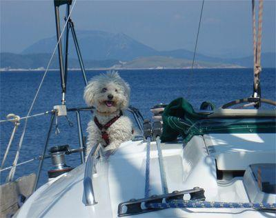 Sailing Greek islands - Greece charter sailing holidays - Animaux Bienvenus - Dog on deck of a sailboat being happy in the wind