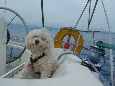 Sailing Greek islands - Greece charter sailing holidays - Pet Friendly - Dog on Sailboat helping with sailing