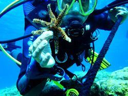 Sailing Greek islands - Greece charter sailing holidays - Plongée Destinations - Diver with StarFish